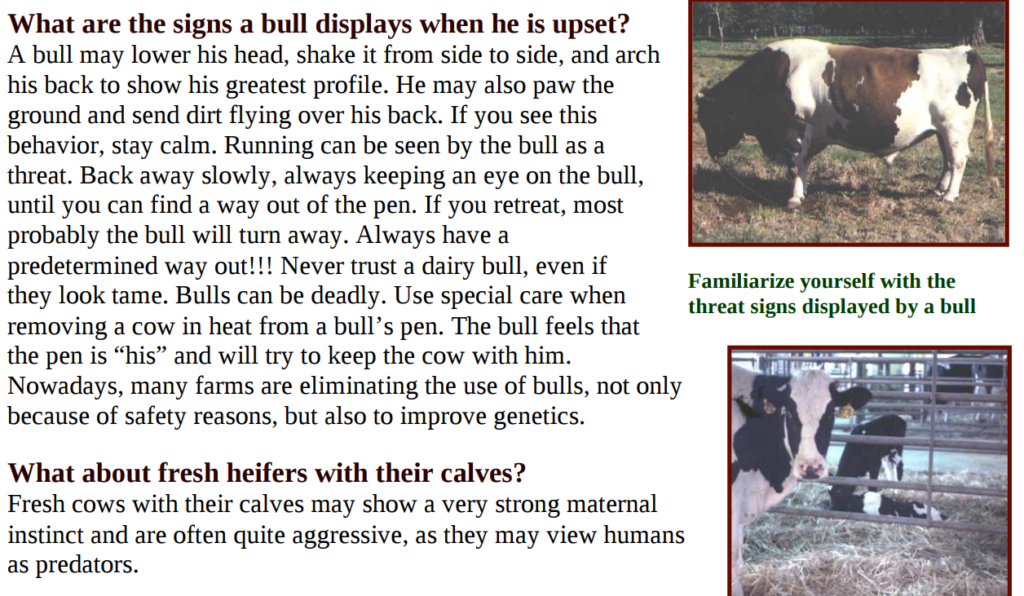 Behavior of bulls in jallikattu videos - my response to PETA India 1