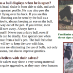 Behavior of bulls in jallikattu videos – my response to PETA India