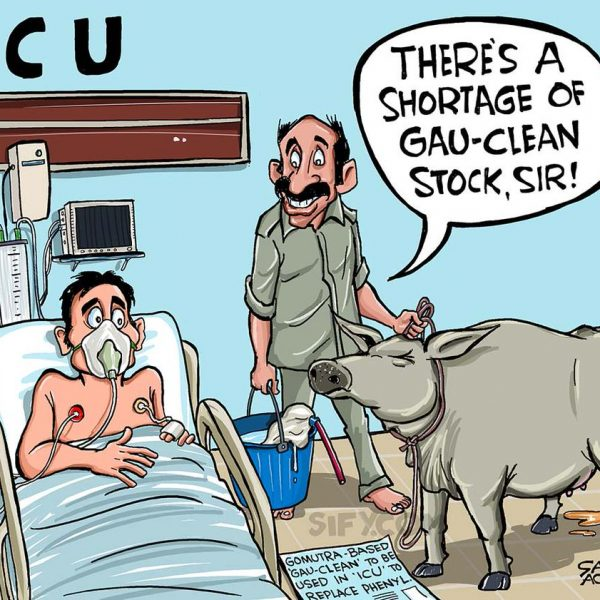Satish Acharya cartoon for Sify.com on the cow urine disinfectant for hospitals