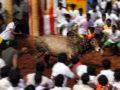 Jallikattu in Alaganallur, Madurai