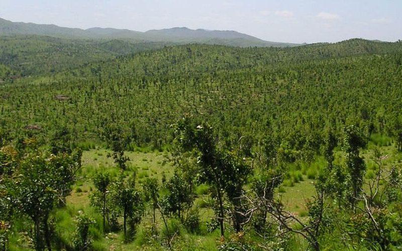Kalpavalli reclaiming of denuded land Timbaktu