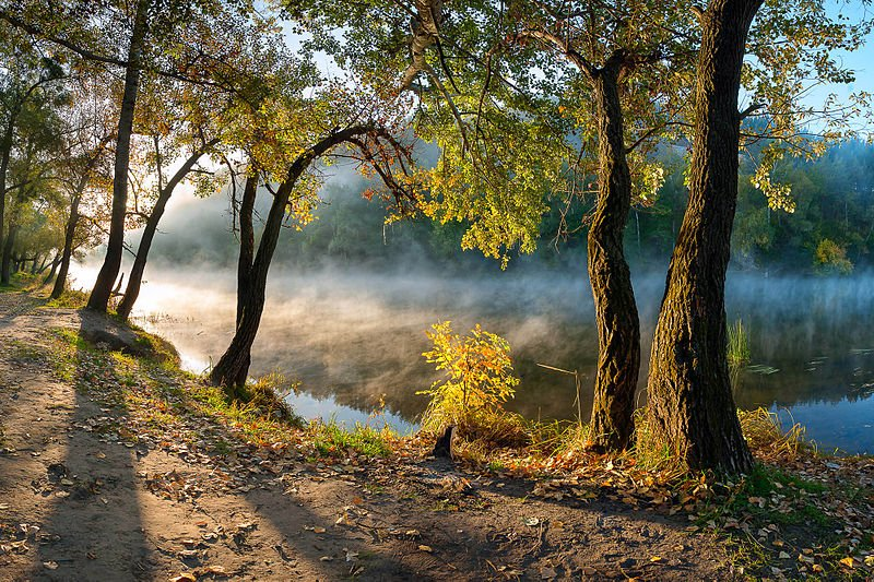 misty idyll forest ukraine