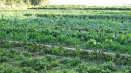 organic farm beds cultivation