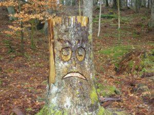 Sad face on tree stump. Image: Iain Lees